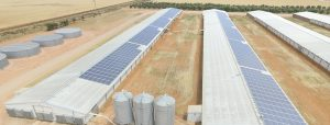 Rooftop solar installation at Markou Broiler Farm